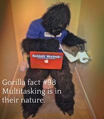 Gorilla fact #98