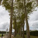 Lines of trees, Versailles