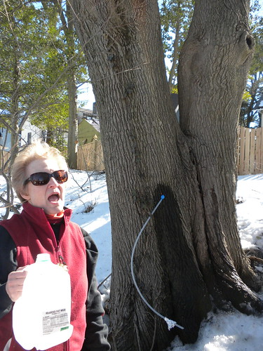 Maple Sugaring with Friends of High School Park