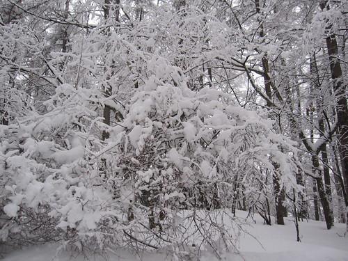 湿った重い雪です by Poran111