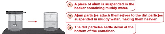 NSO - Class 5 - Science - Q26