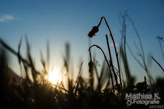 Im Gras | Projekt 365 | Tag 107