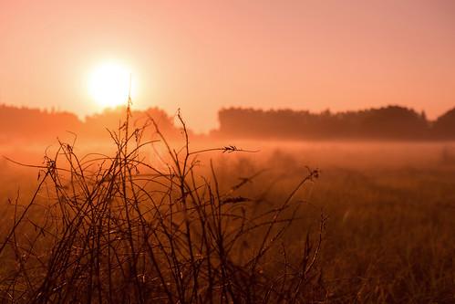 usa sun field america sunrise tampa dawn florida farming cobweb agriculture earlymorningmist
