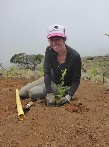 Restoration Intern Heather Mackey planting in an erosion scar.