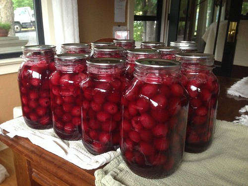 14 quarts of sweet cherries!