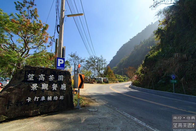 望高茶園25