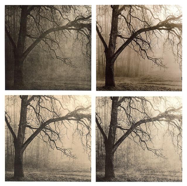 Baum im Nebel - Lithvariationen