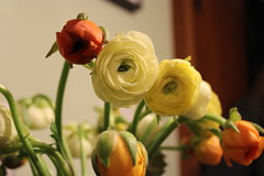 Birthday: Ranunculus
