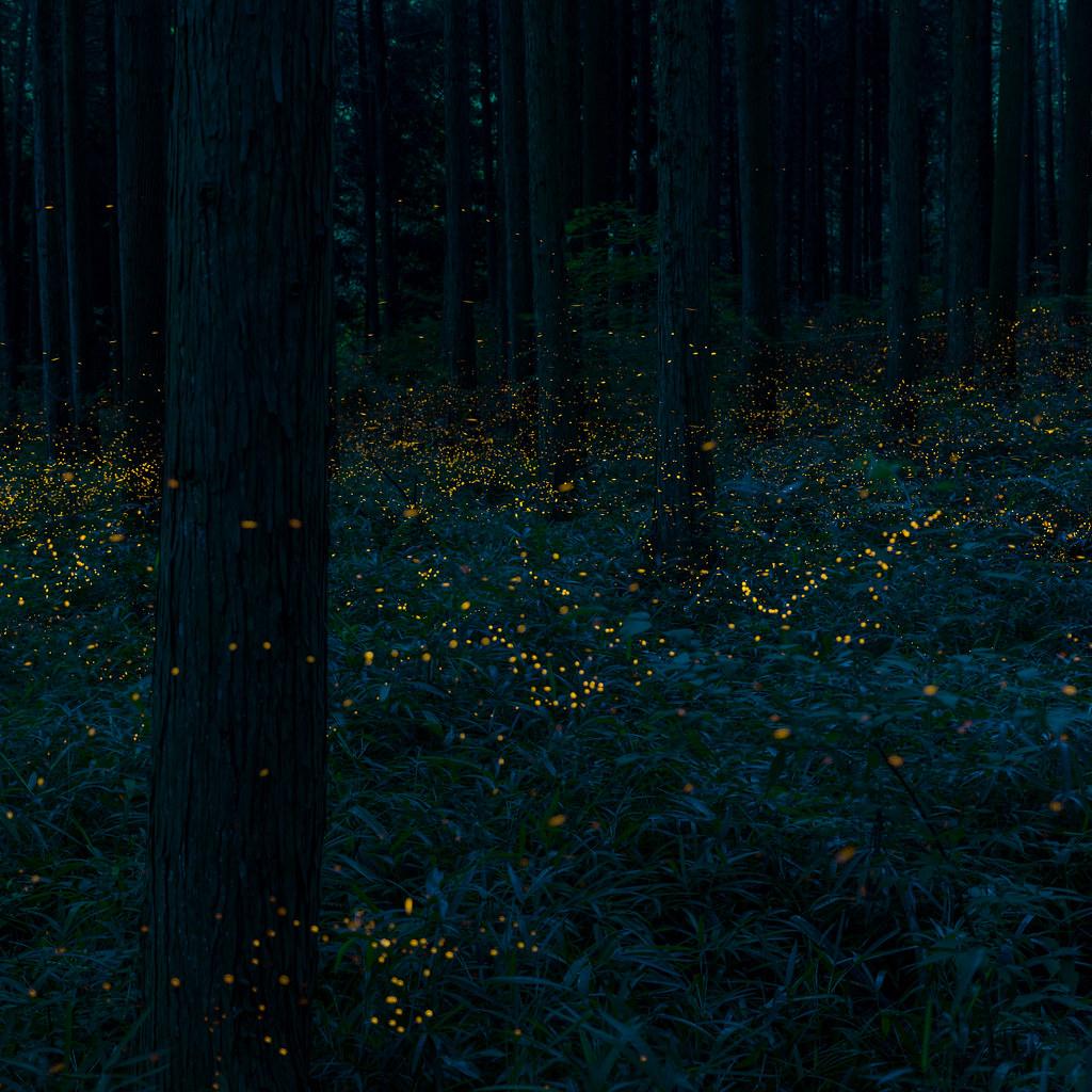 杉林の煌めき