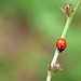 ladybug on tour by Sabinche