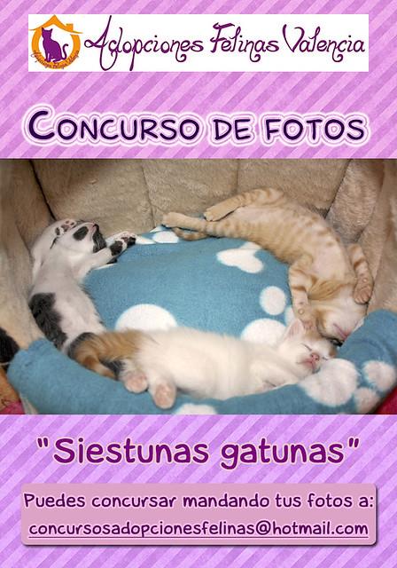 """4º Concurso fotográfico: """"SIESTUNAS GATUNAS...."""" Bases y fotos participantes 9680833264_ea0fb48dc1_z"""