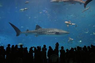 Day2-2 感動の美ら海水族館