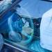 Lambrecht Chevy Auction-246