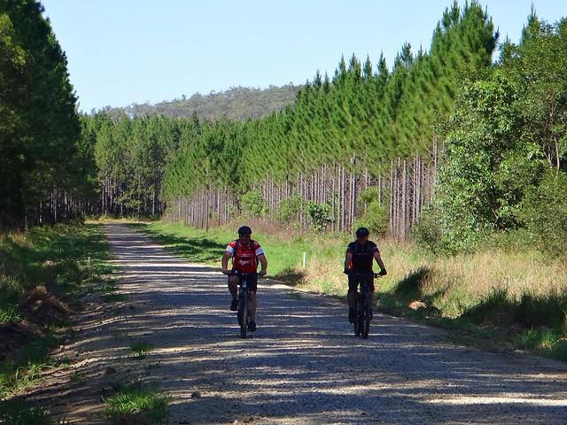 Forestry Fire Roads