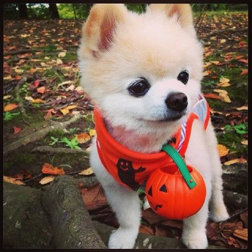 Shunsuke halloween!!! <3 =D #Rhea