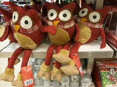 burrowing owls of primark