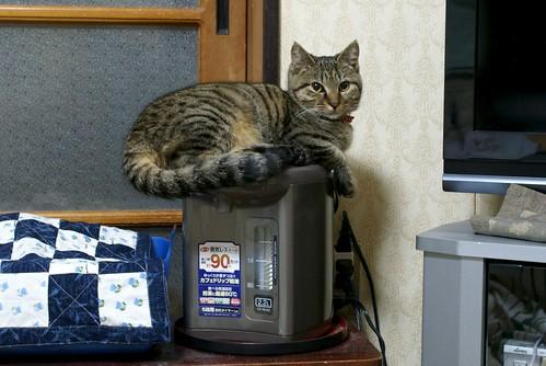 ネコの習性