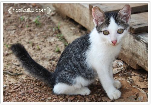 10988789766 d02e7fffa3 o kucing kesayangan nenek