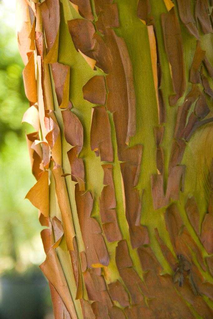 arbutus bark 2