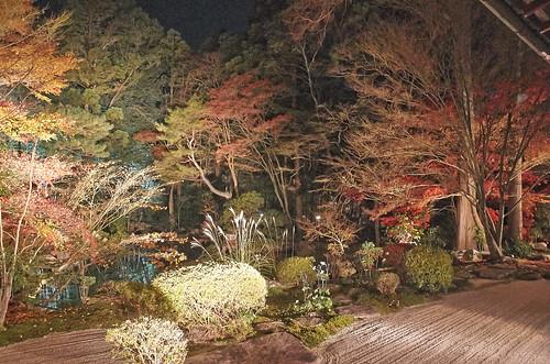 【写真】2013 紅葉 : 天授庵/2020-05-17/IMGP3738