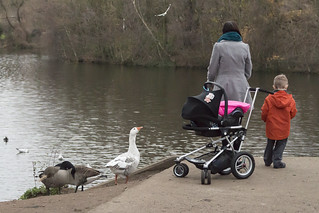 342. Feeding the ducks. 09-12-2013