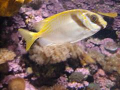 Townsville tropical Aquarium.