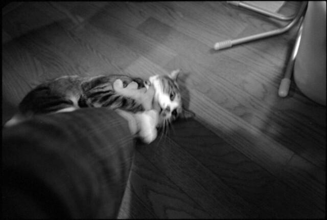 20131219 LeicaM4-P G-rokkor 400TMY TMD ei800 045