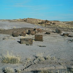 10 - Petrified Wood at Crystal Forest