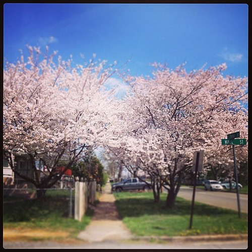 Today was the most glorious of all glorious spring runs. 4.5mi of flowering trees, daffodils, bunnies and sunshine (at a cool 50*). Spring makes EVERY neighborhood pretty.    I'm still a little high  (runner's high + so many flowers + long winter = euphor