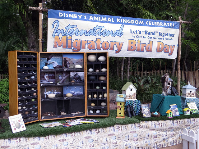 IMBD at Animal Kingdom