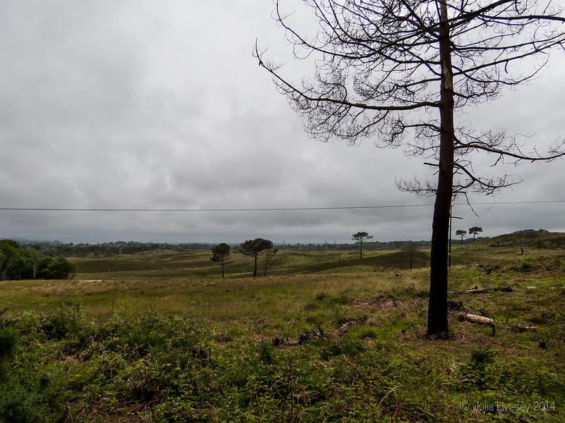 A damp day on Upton Heath