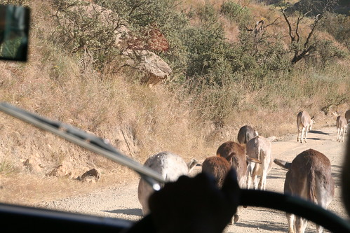 Donkey Roadblock on the Sani Pass