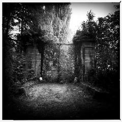 #dourdan #france #grille #bnw #mobilephotography #monochrome #blackandwhite #noiretblanc #nb