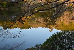 ryoanji pond