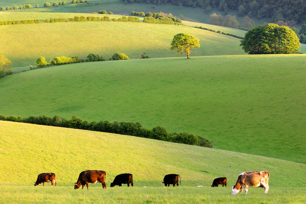 May Evening, Stanmer Down