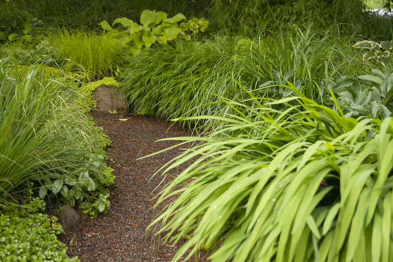 Grasses and Hostas