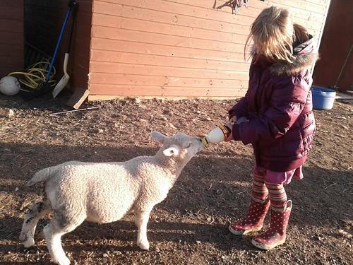 morgan lambkin