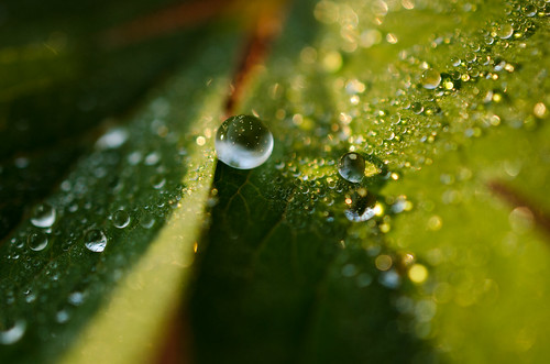 Sunrise, dewdrops, and pollen