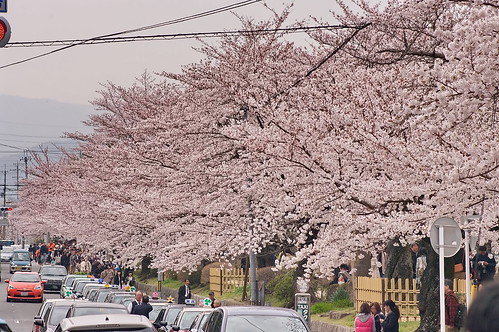 【写真】2013 桜 : 哲学の道/2018-12-24/IMGP9248