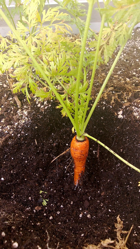 Weekly Harvest WP_20130728_007