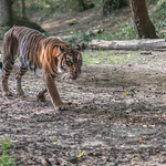 2013-08-31_Dallas-Zoo-2800