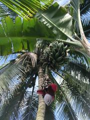 Bananenblüte - Ubud