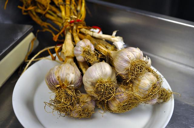 Sweet Cheeks Garlic