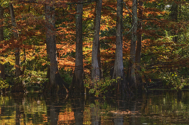 Mingo National Wildlife Refuge, in Puxico, Missouri, USA - line of trees