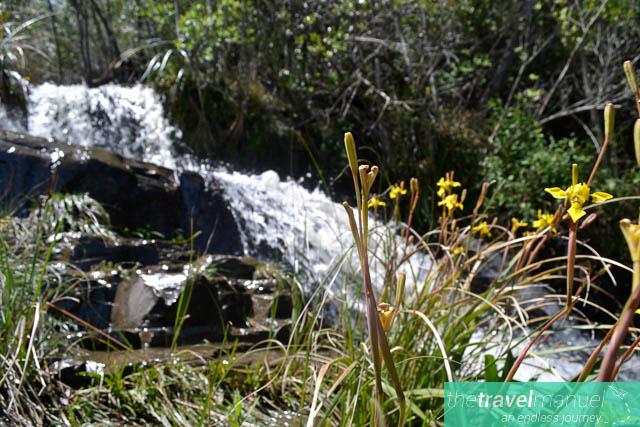Enchanted Hogsback Forest