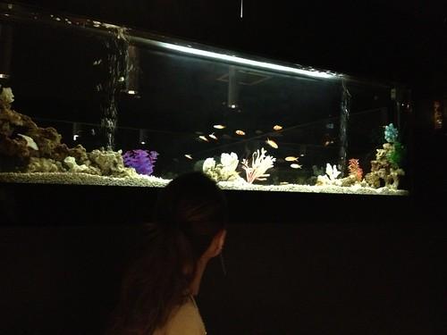 個室には熱帯魚が!@水想