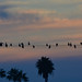 Cormorants on the wire - #San Elijo #sunset by nhillgarth