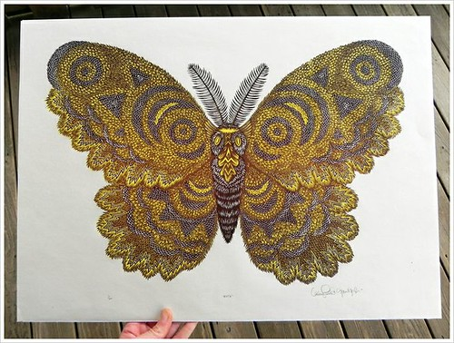 Moth Woodcut Print by Tugboat Printshop, Insect Illustration Art