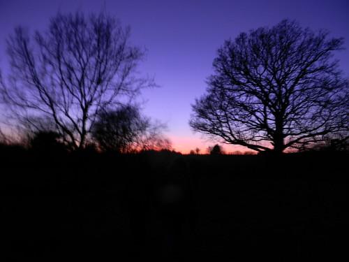 Trees at dusk 2