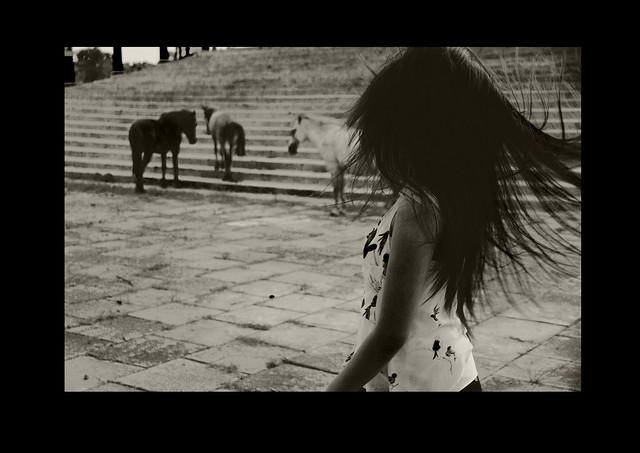 birdshorses